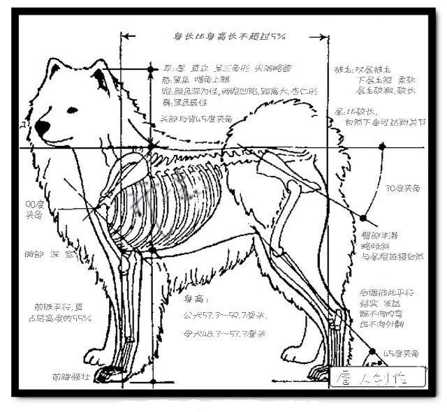臀部外表的结构示意图